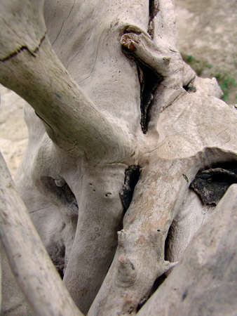 farbe: weathered root of a umgestuerzten tree Stock Photo