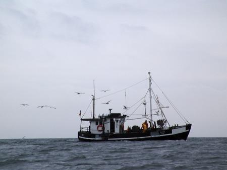 wasser: M�wenf�tterung auf der Ostsee