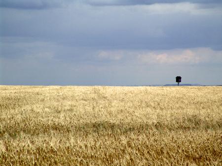 feld: Landscape