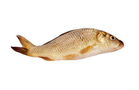 carp isolated on white background Stock Photo - 8934199