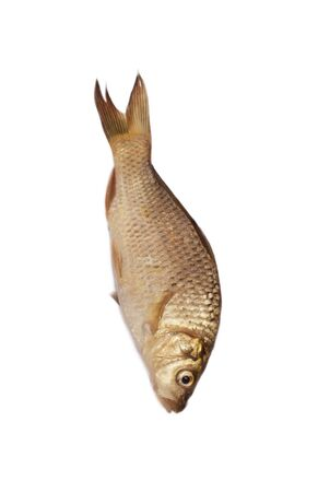 big carp isolated on white background Stock Photo - 8934211