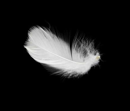 piuma bianca: Penna bianca isolato su sfondo bianco