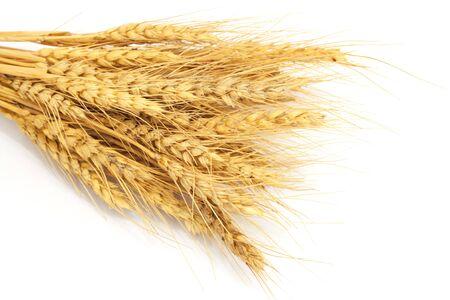Bundle of Wheat isolated on white  photo