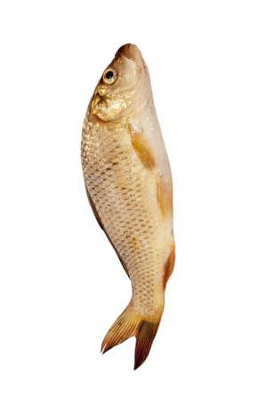 carp isolated on white background  Stock Photo - 9598158