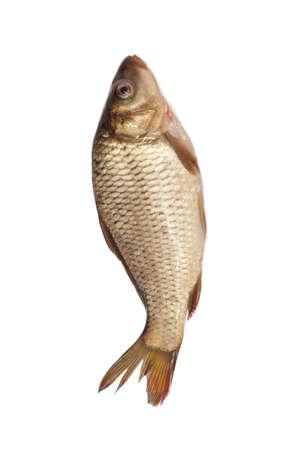 big carp isolated on white background  Stock Photo - 9598305