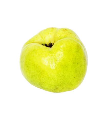 membrillo: Quince (manzana de oro) sobre fondo blanco