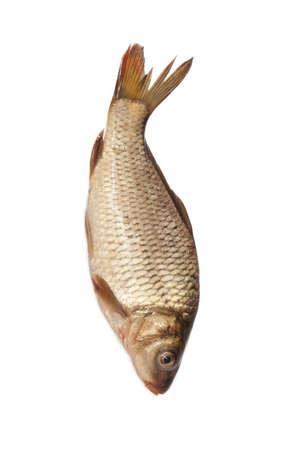 big carp isolated on white background  photo