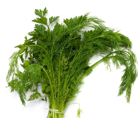 dill and parsley at platw isolated on a white background Stock Photo - 10090528