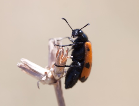 ladybird beetle photo