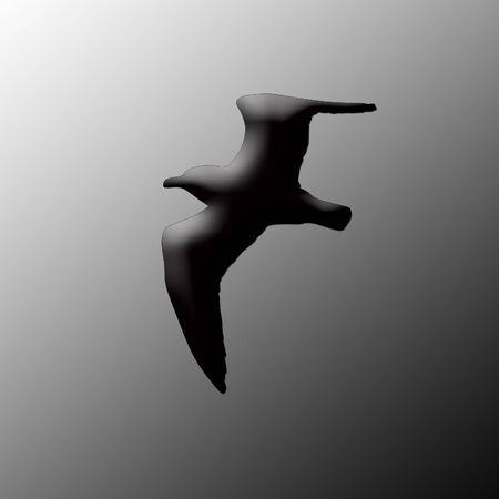 silhouette of the sea gull photo