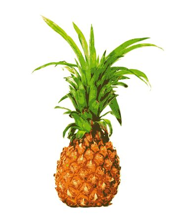fruited: Pineapple on a white background