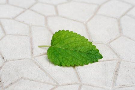 green leaf from a tree on a stone background photo