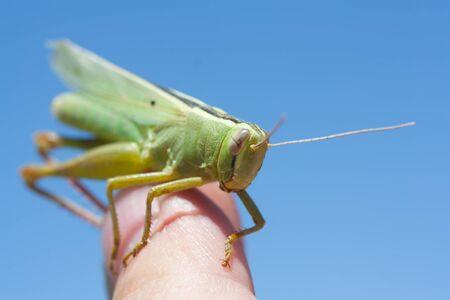 grasshopper in the sky photo