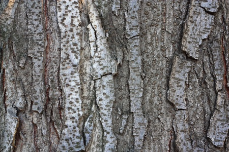 bark background: Wood seamless pattern