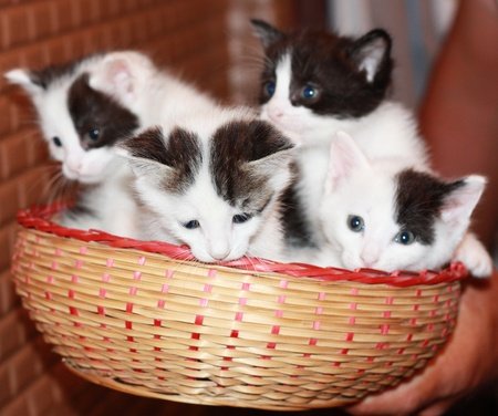 four kitties photo