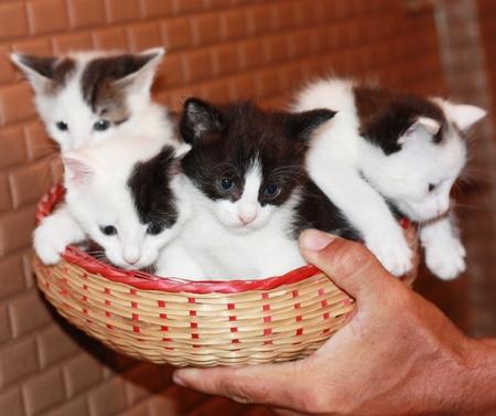 four kitties Stock Photo - 10307971