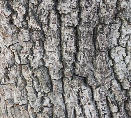 Old tree bark texture  Stock Photo - 10308135