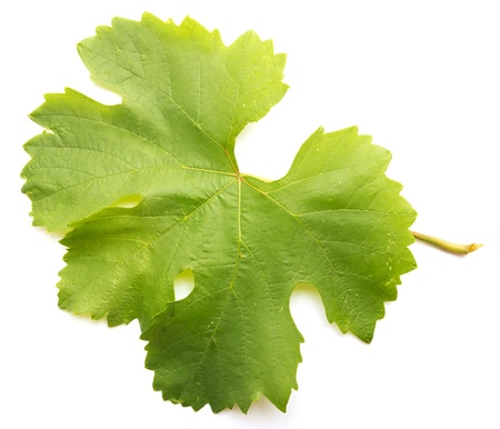 grape leaf on a white background Stock Photo - 10307901