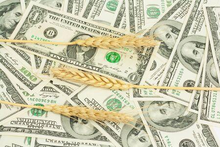 cash crop: wheat background on dollar Stock Photo