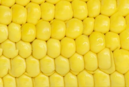 corn . macro photo