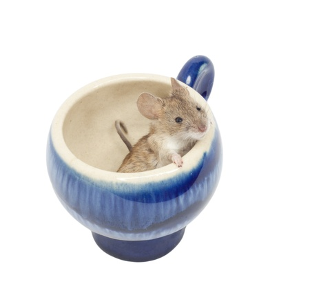 mouse in a blue glass photo