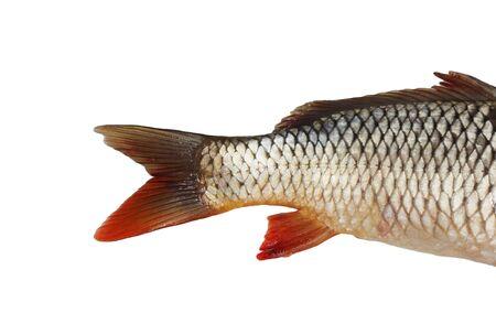 fish tail: Fish tail,carp  Stock Photo