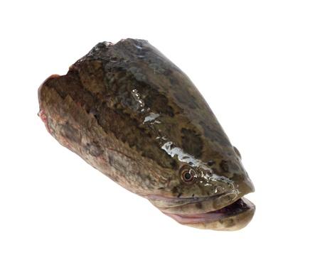 snakehead: head snakehead