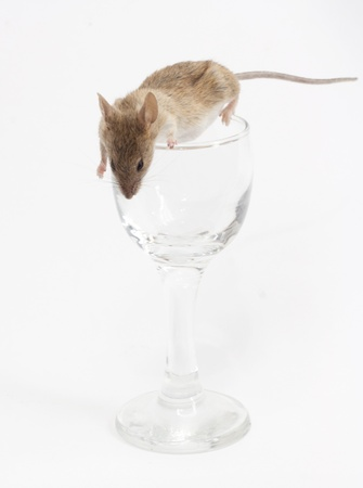 prying: Mouse in a crystal glass