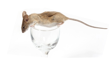 Mouse in a crystal glass photo