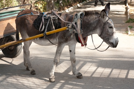 donkey with a cart Stock Photo - 10915100