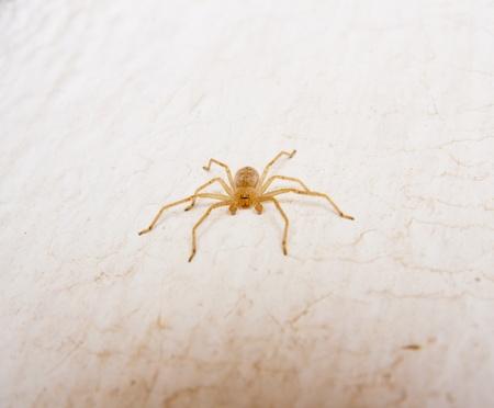 yellow spider photo