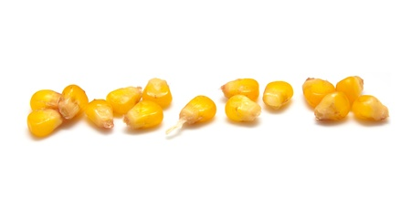 genetically modified organisms: yellow corn grain on white background