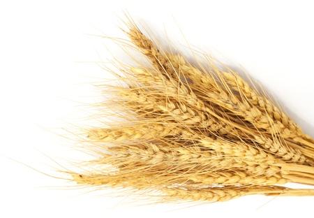 Связка пшеницы, изолированных на белом