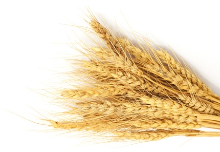 shavuot: Bundle of Wheat isolated on white