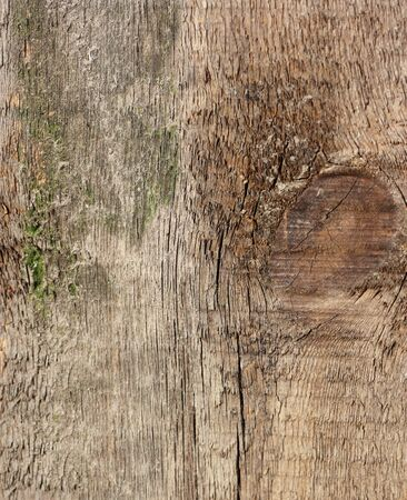 Wooden texture - can be used as a background  photo