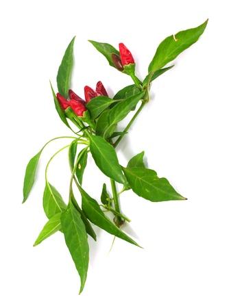 Маленький красный горячий гавайский Чили Peppers