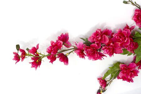 nurseries: Sakura