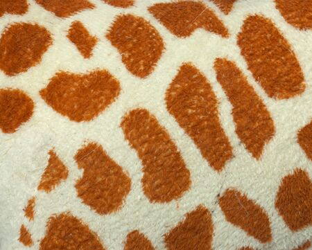 textured skin of giraffe   photo