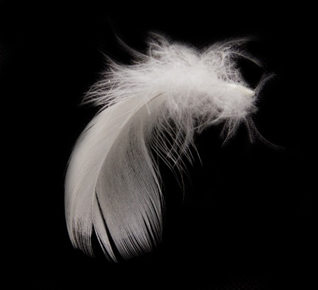 effortless: feather on the black background  Stock Photo