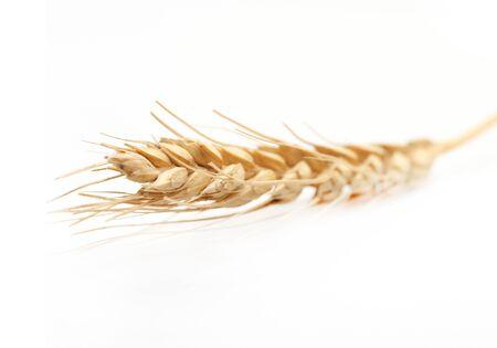 Golden wheat frame selective focus