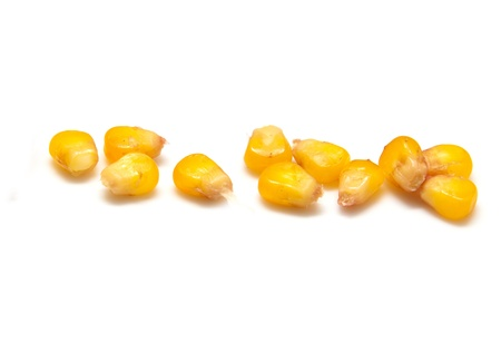 corn kernel: yellow corn grain on white background