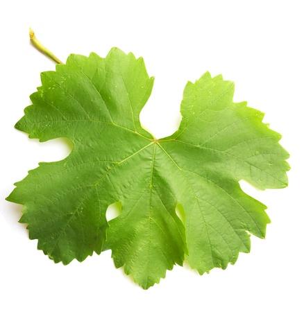 grape leaf on a white background