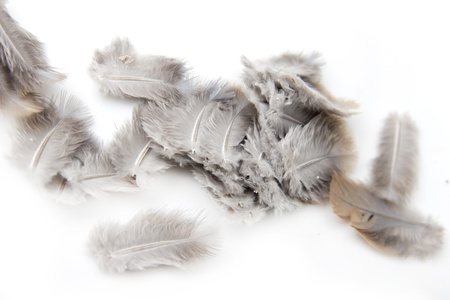 bird feathers on a white background photo