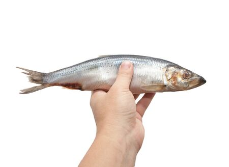 herring in his hand on a white background photo