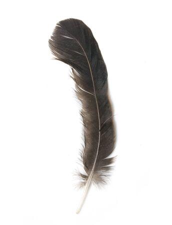 hawk feathers: Bird feather isolated on white background  Stock Photo