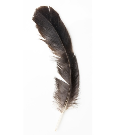hair feathers: Bird feather isolated on white background  Stock Photo