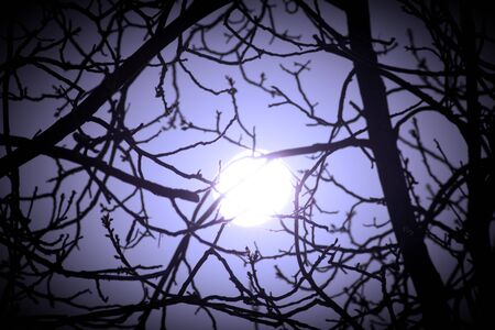 Real bright full moon behind some tree branches Stock Photo - 13203233
