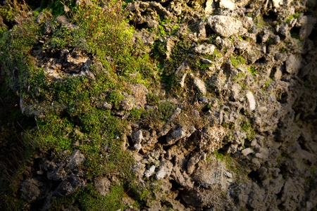 moss on the concrete . light from above photo