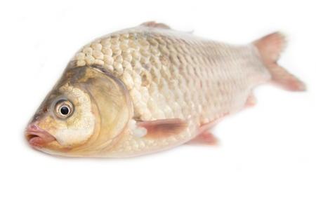 crucian carp: crucian carp on white background