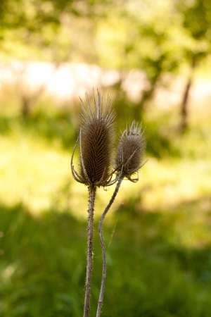 dry grass on the nature Stock Photo - 13836541